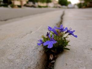 flowers-sidewalk-crack